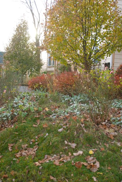 Here is the Hill Garden with the low November light going down behind it. I am pleased with the color variation in the foliage at this time of year.