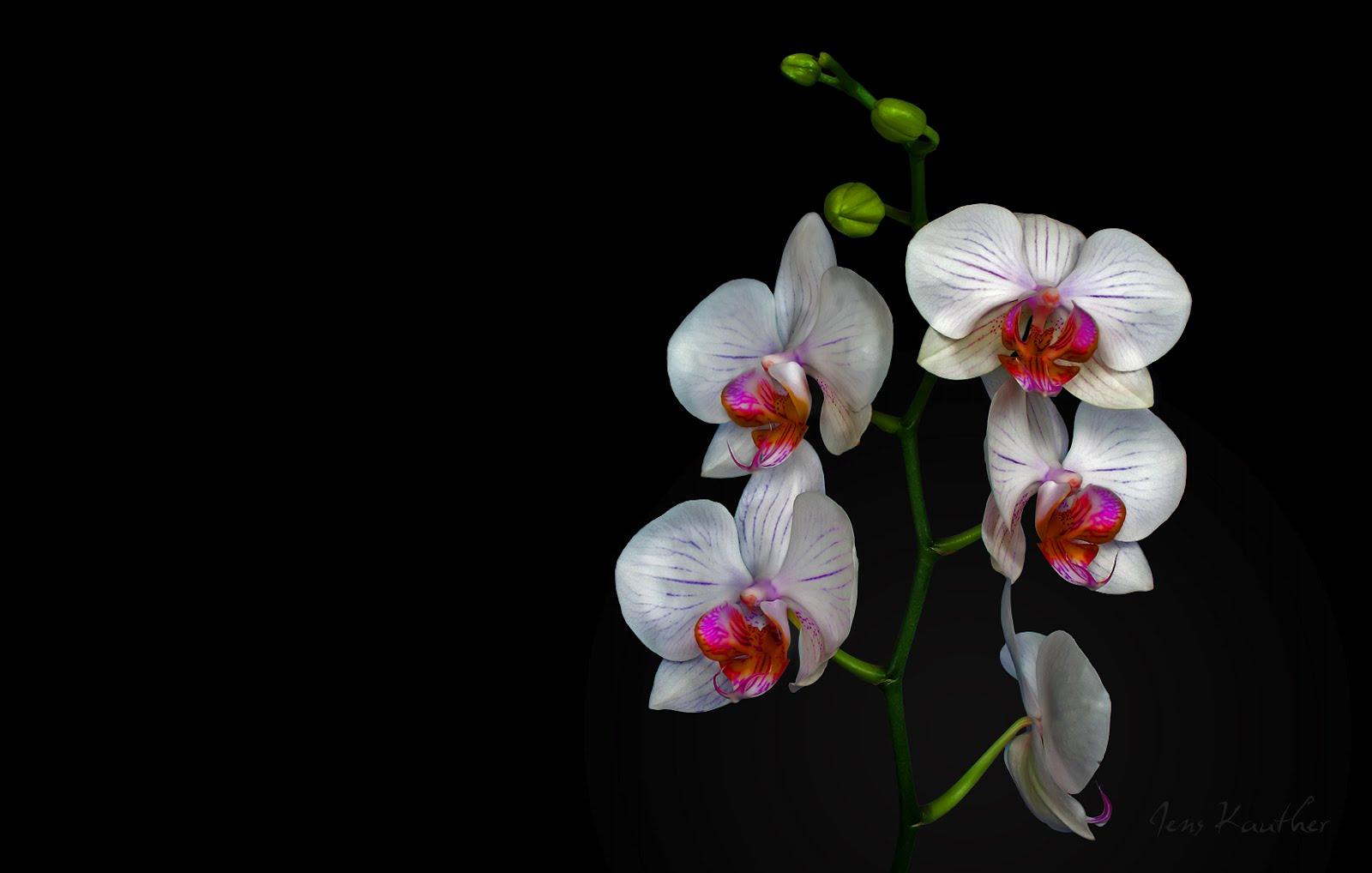 http://1.bp.blogspot.com/-eotzKmcpyrY/T361BNOUvHI/AAAAAAAAFPU/md-12XW5OP0/s1600/poze_orhidee.jpg