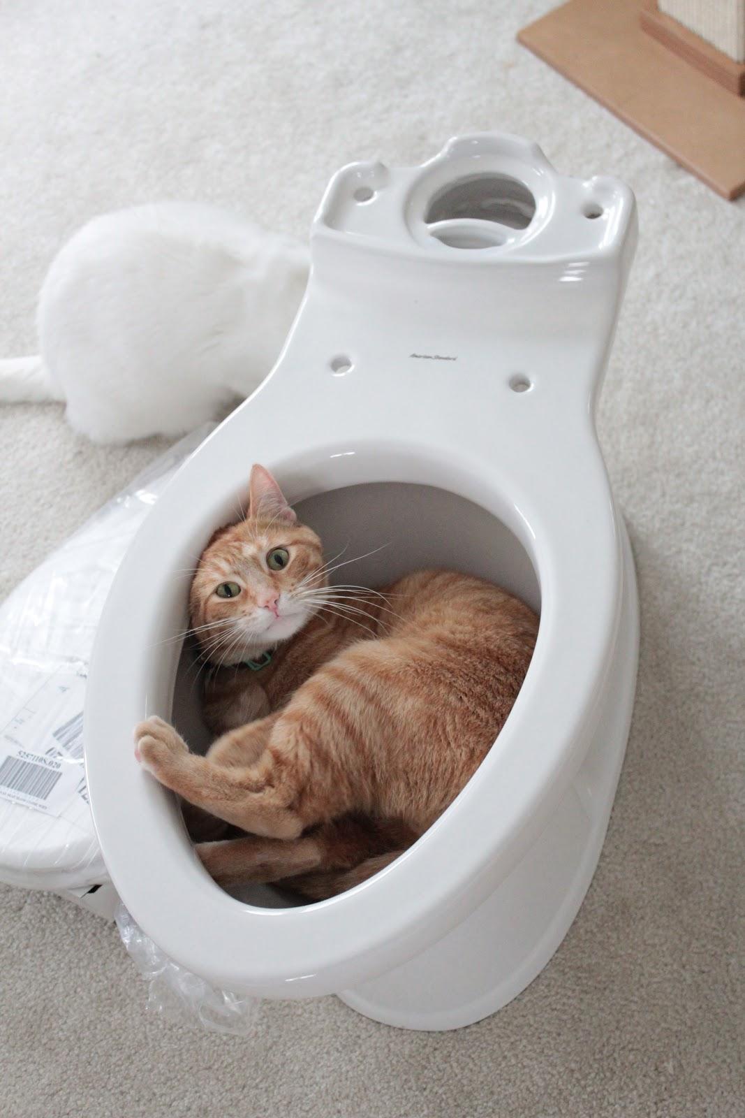 Bigger better best bathroom bumpup toilet toils for Commode kitty
