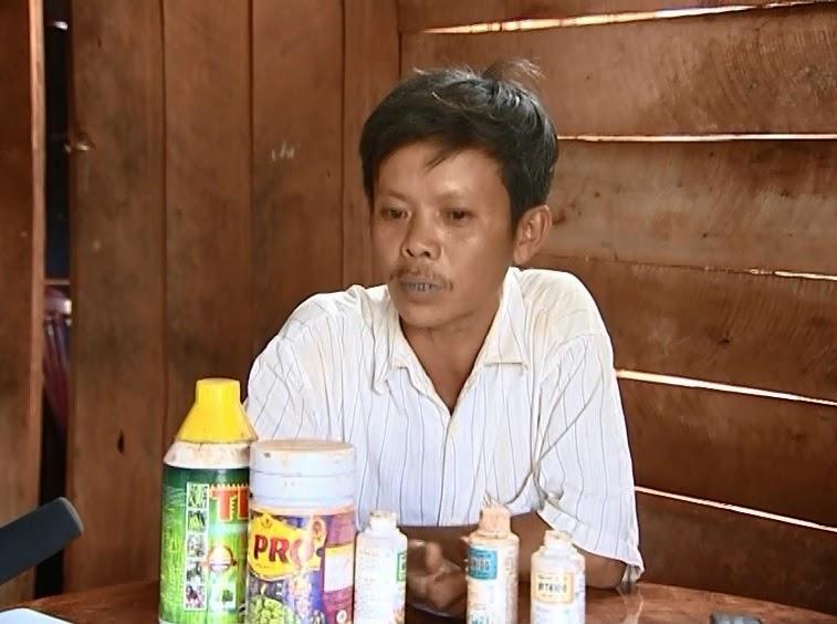 Gia Lai: Nông dân trồng tiêu thiệt hại do sử dụng phân bón