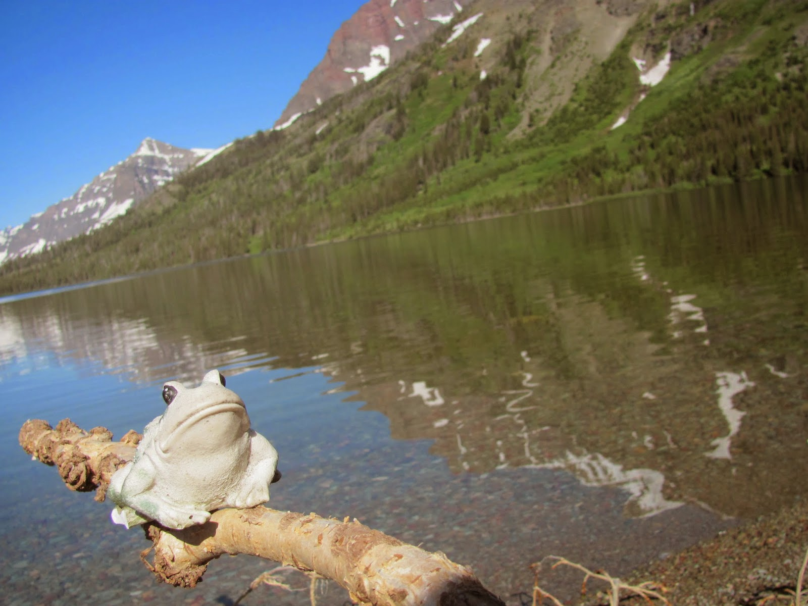 Frog poses on the bank of Two Medicine Lake at Glacier National Park in Montana