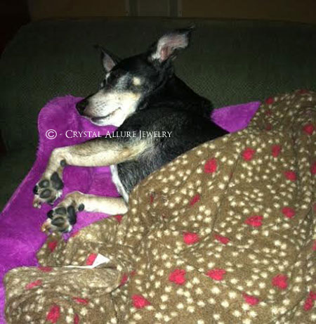 Rescue Dog Lucy Snuggled In Bed. Photo Credits: Crystal Allure Beaded Jewelry