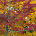 Colorful Autumn Trees images