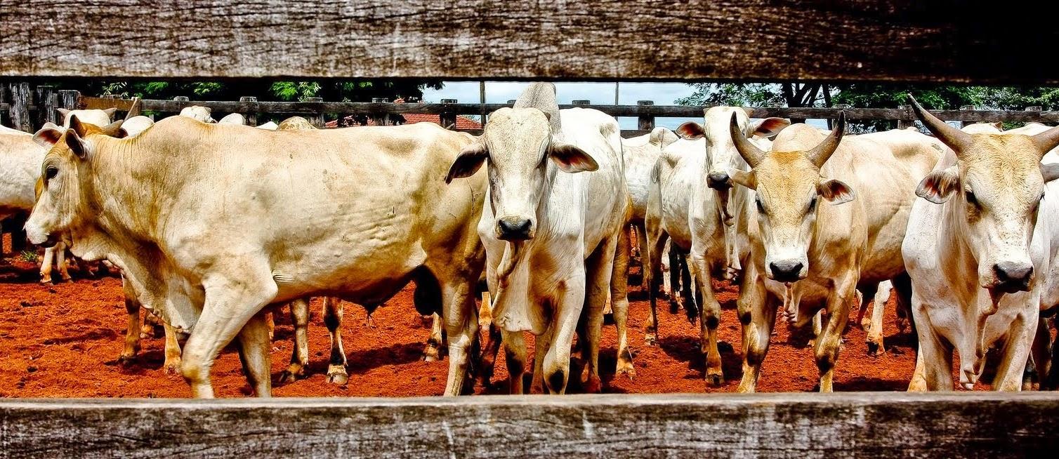 Mato Grosso e Pará - Lista Geral