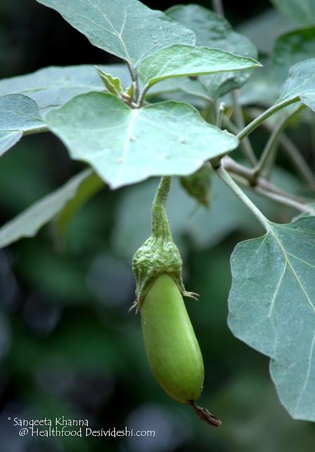green eggplant