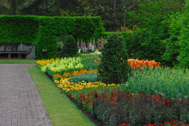 They seem to loosely follow the Jekyll color flow in these borders in most seasons. This photo shows it moving from reds through orange, yellow and white. The beech hedge and half-round seat are the end of the long border.
