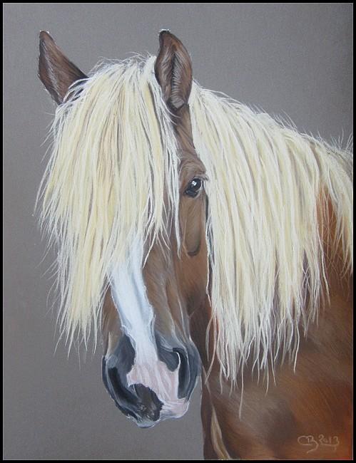 Portrait Haflinger