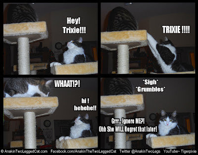 LOLCats Anakin Two Legged Cat Ignored by Trixie