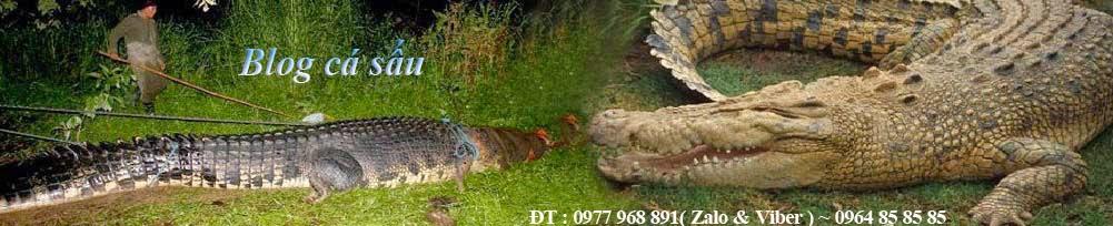Blog Cá Sấu- Chuyên dây da đồng hồ, ví da cá sấu, dây thắt Lưng cá sấu