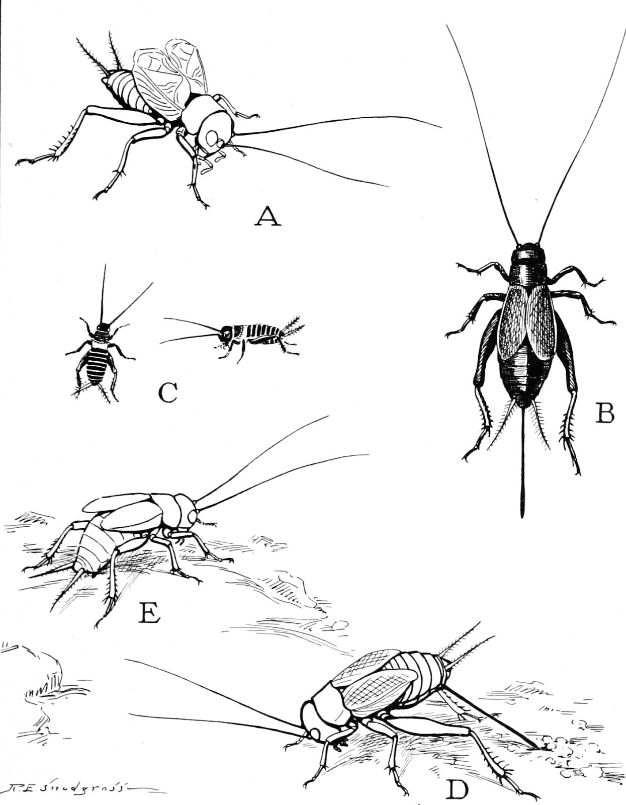 Crickets.