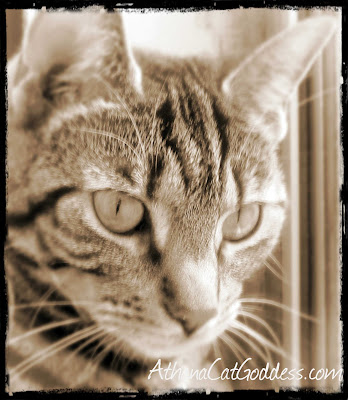 vintage-style cat photo