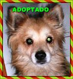 FOXIE ADOPTADO!!!