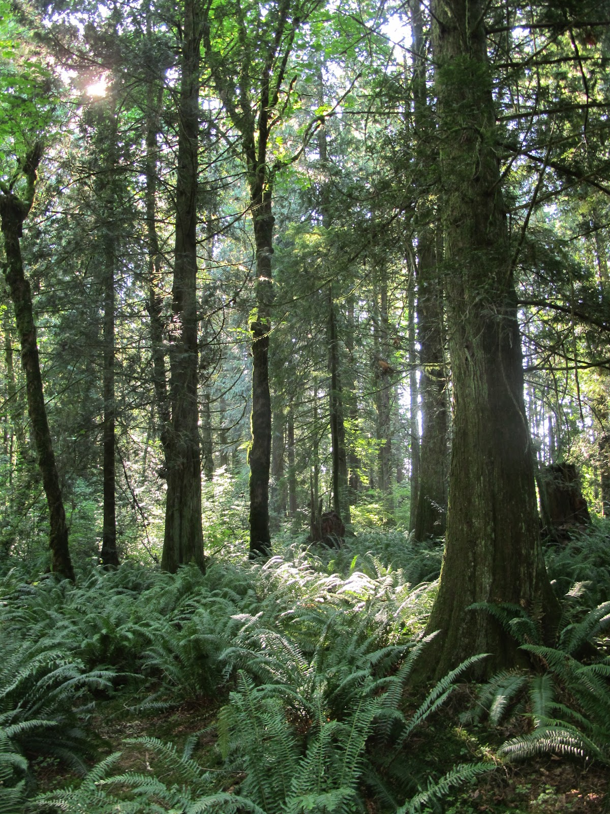 preservation of forest Forests are re-growing on abandoned agricultural land across vast reaches of and some of this money would flow abroad for forest preservation.