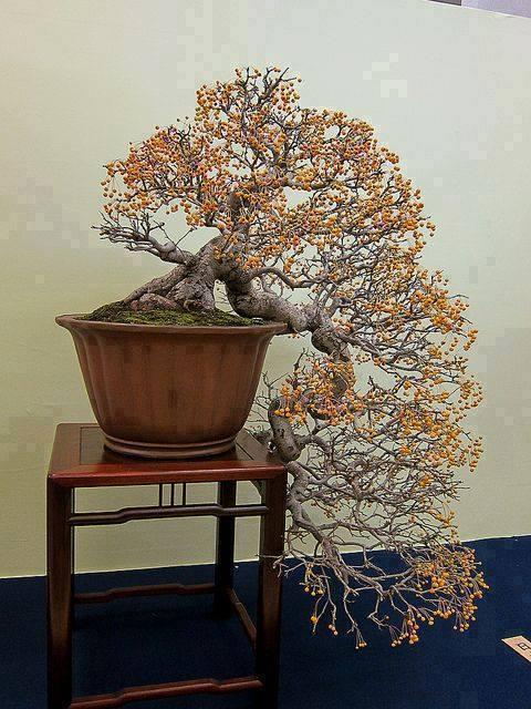 bonsai yang dibentuk dengan unik