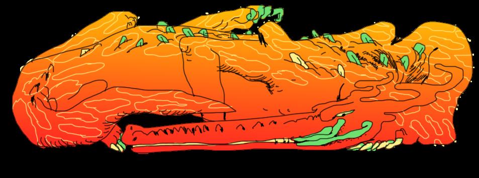krakodile