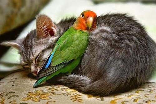 விலங்குகளின் -வினோத படங்கள்.. - Page 2 Funny+Animal+Love_8