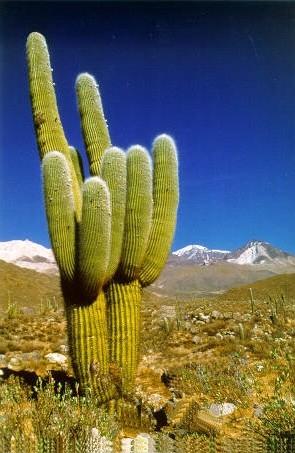 las plantas flora y fauna: