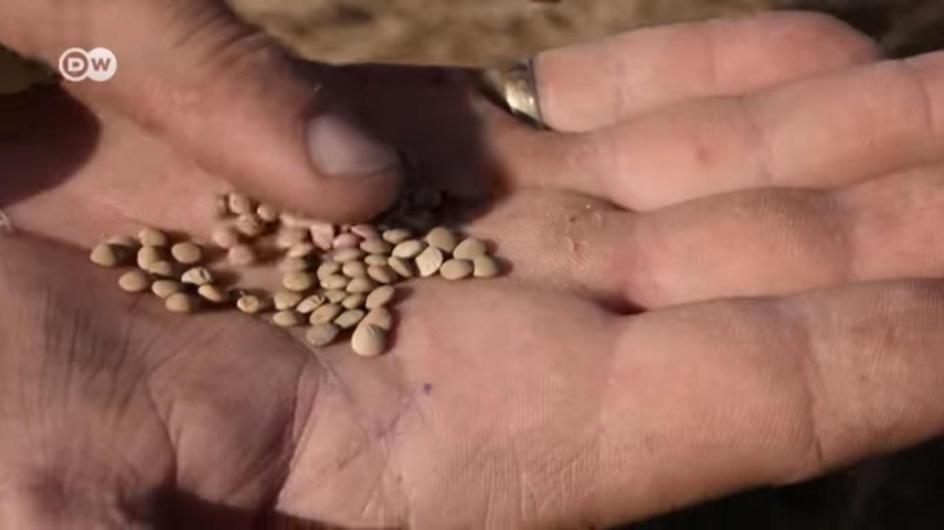 VIDEO: LENTEJAS, LAS PERLAS DE LA TIERRA