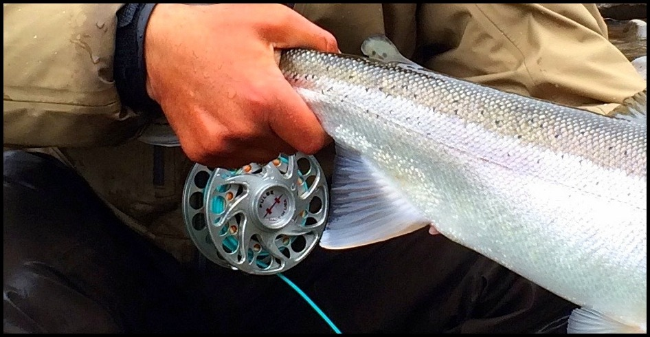 Gorge fly shop blog why i fish hatch fly reels for Hatch fly fishing