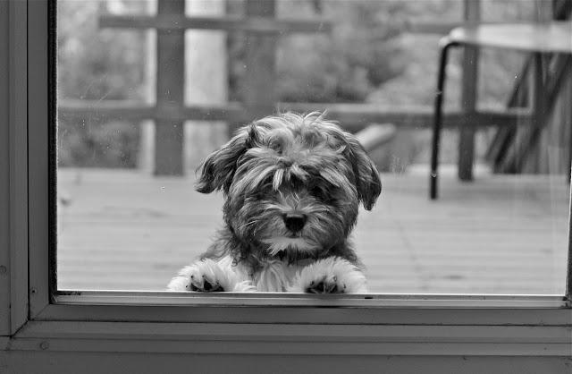 Doggie in the window