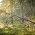 Cudze chwalicie, swego nie znacie: Słowiński Park Narodowy. Początki. (część 1)