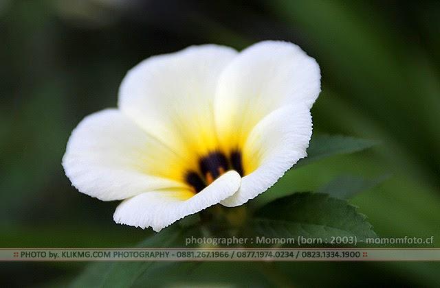 Aneka Bunga - Photo oleh : Momom 11th (FG4) KLIKMG.COM Photography