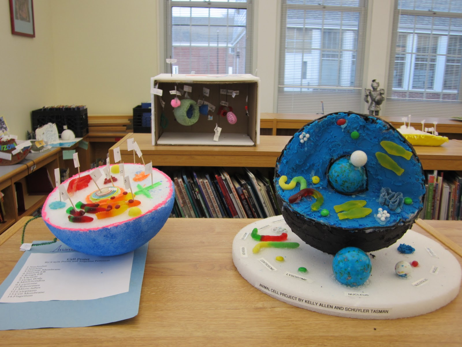 Animal cell model project for school a plant or animal cell