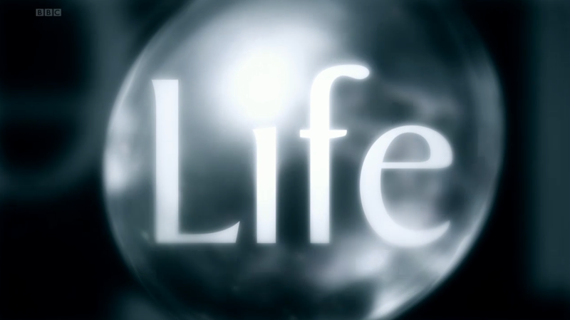 life is a gift life ca...