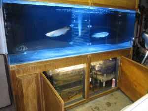 Giant aquariums acrylic fish tank aquarium 450 gallons for Used 300 gallon fish tank for sale