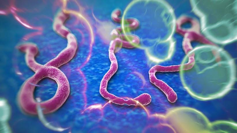 Apakah Virus Ebola?