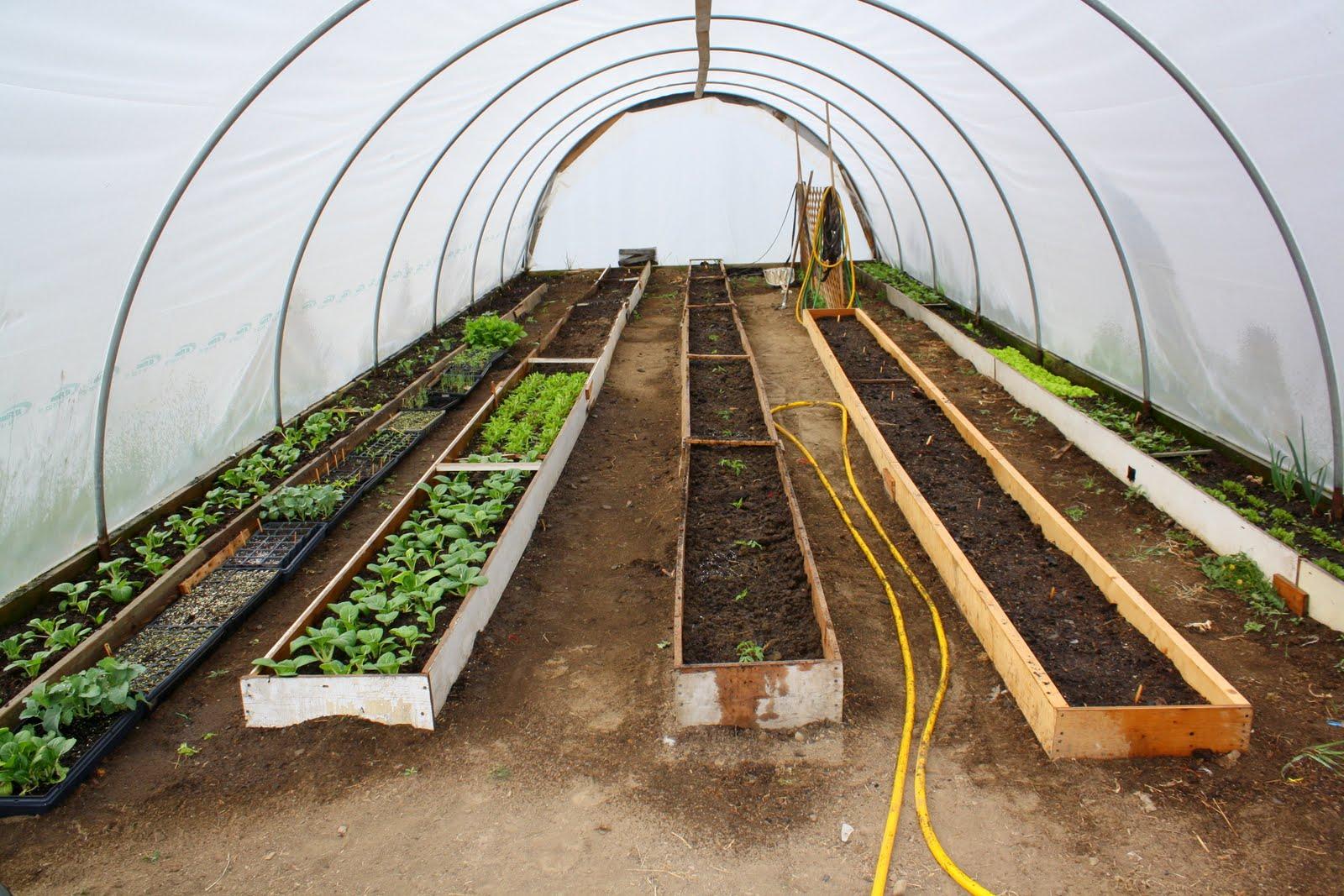 Achorn Farm: Scenes from the Green House