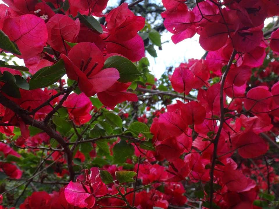 Uma flor por dia primavera - Plantas de temporada primavera ...