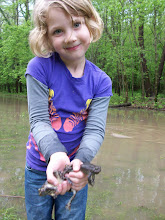 Laurie Frog Catching