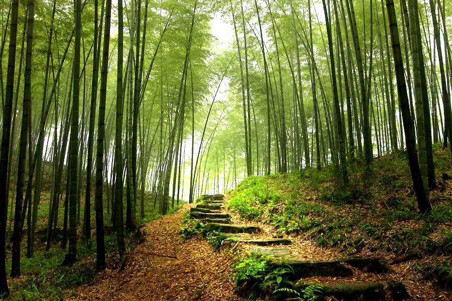 http://1.bp.blogspot.com/-etueRMoqsAI/T-_OnA5JiKI/AAAAAAAAKsM/D-9hUDisnsg/s1600/bambou1.jpg