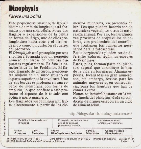 Blog Safari Club, características del Dinophysis
