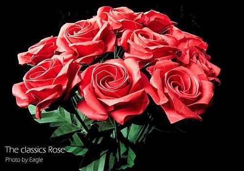 各種玫瑰花