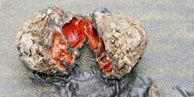 Batu yang Dapat Dimakan Warga Chile dan Peru Menyukainya