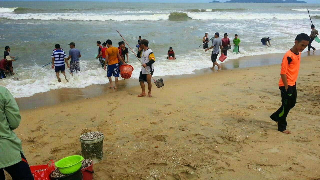 pantai marang dibanjiri ribuan kerang.