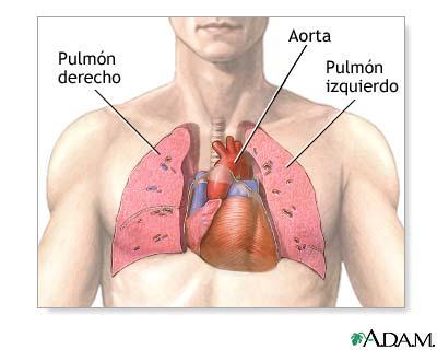 Cardiología: Salvando Vidas