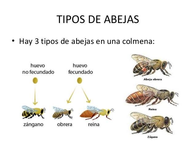 La miel de abeja engorda yahoo dating