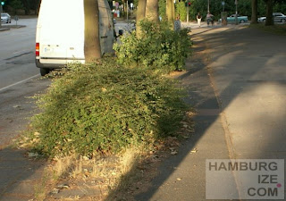 """""""Radweg"""" Hammer Landstraße"""