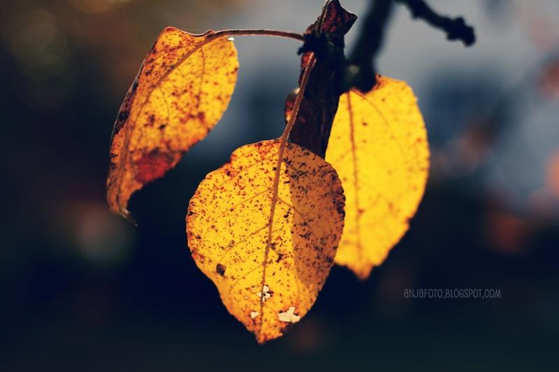 jesień, autumn, liście, autumn leaves