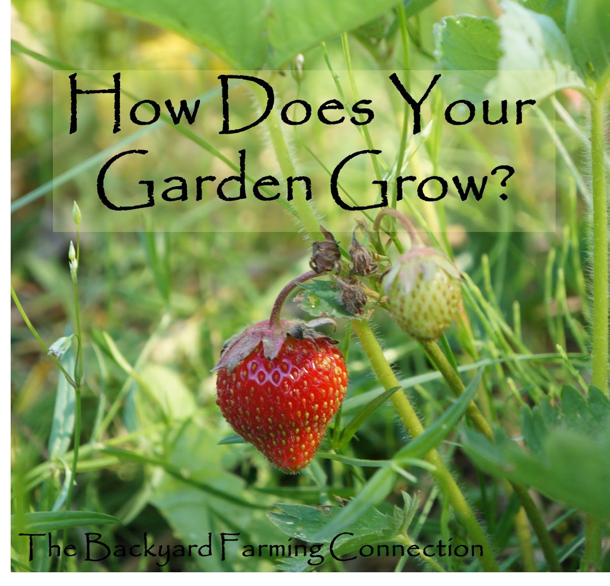 how to grow a garden 21 synonyms of grow from the merriam-webster thesaurus, plus 36 related words,  a dedicated home gardener who grows tomatoes in her small garden every summer.
