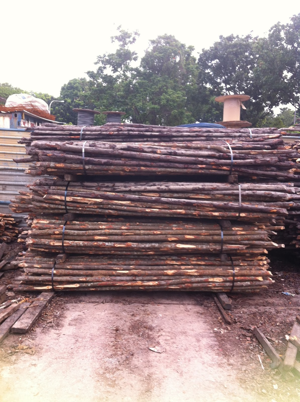 Yong hua heng bakau piling wood scaffolding wood poles for Wood piling foundation
