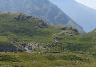 The area around Camp des Fourches is summer pasture for sheep