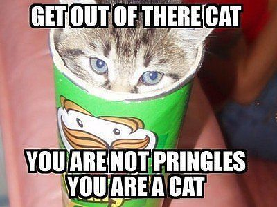 Get Out Of There Cat - You Are Not Pringles You Are A Cat
