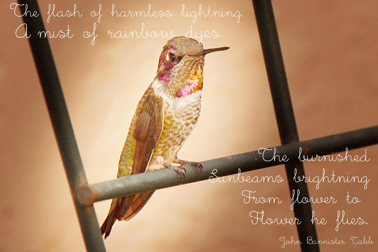hummingbird images and quotes love quotesgram