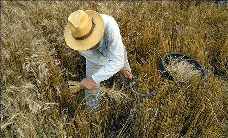 discipelschap betekent helpen oogsten