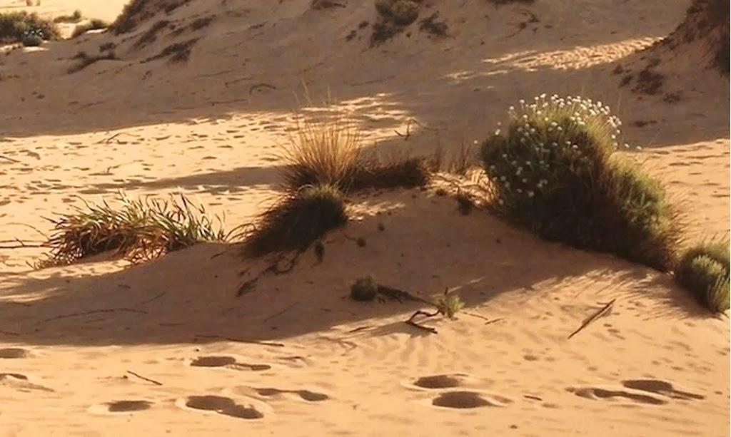 paisajes-al-oleo-marinos-y-con-playas