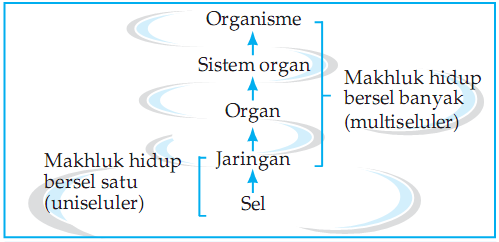 Pengertian Sel Pada Organisme dan Pendapat Para Ahli Tentang Sel